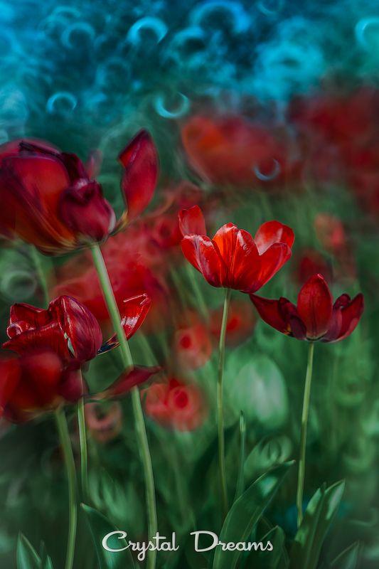 crystal dreams, macro, spring, color, art, nature, flowers \