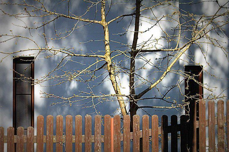 весна весенний этюдphoto preview