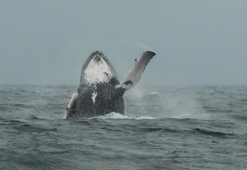 whale, dominican republic, rainy day Hey there human! фото превью