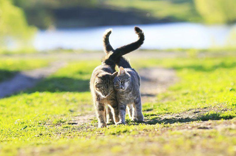 кошки Сладкая парочкаphoto preview