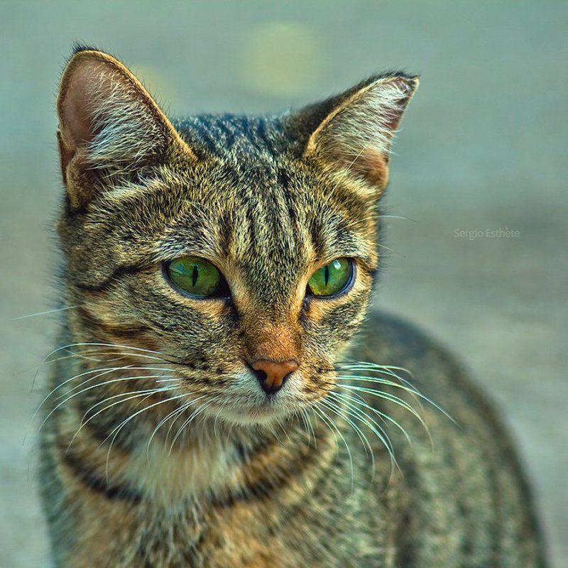 кошка, портрет, юпитер 37а, животные ***photo preview