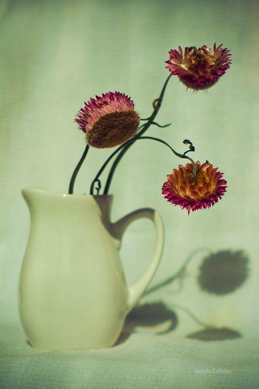 бессмертник, натюрморт, цветы, ваза Бессмертникphoto preview