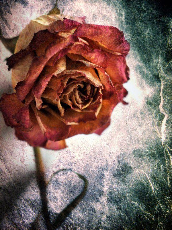 настроение Аленький цветочекphoto preview