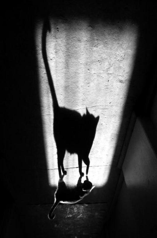 тень и её котphoto preview