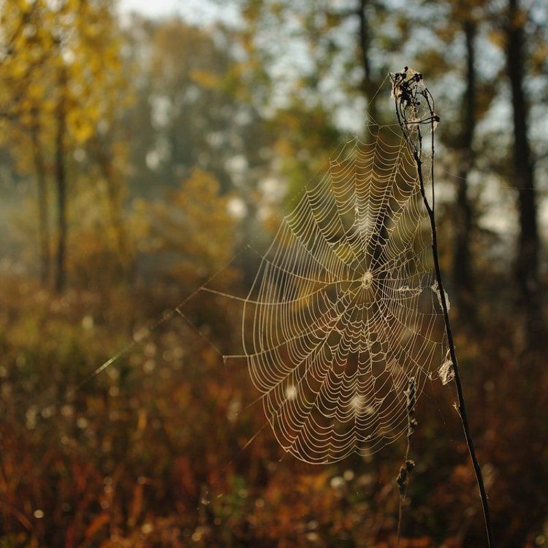 Осень в сети к нам летитphoto preview