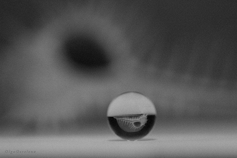 фото, чб, натюрморт, ракушка ракушка 5photo preview