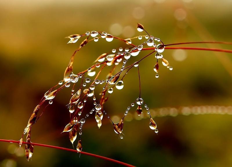 осень, грусть, листва, капли ОСЕННИЙ ВЗГЛЯДphoto preview