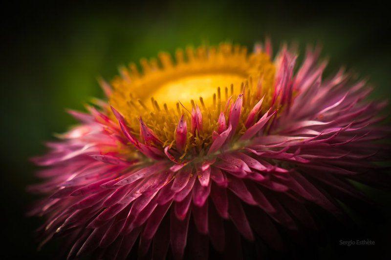 макро, цветы, лепестки *photo preview