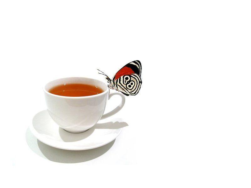 чай, бабочка, белый Чайphoto preview