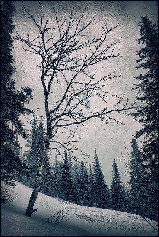 зима, снег, шерегеш Зимнееphoto preview