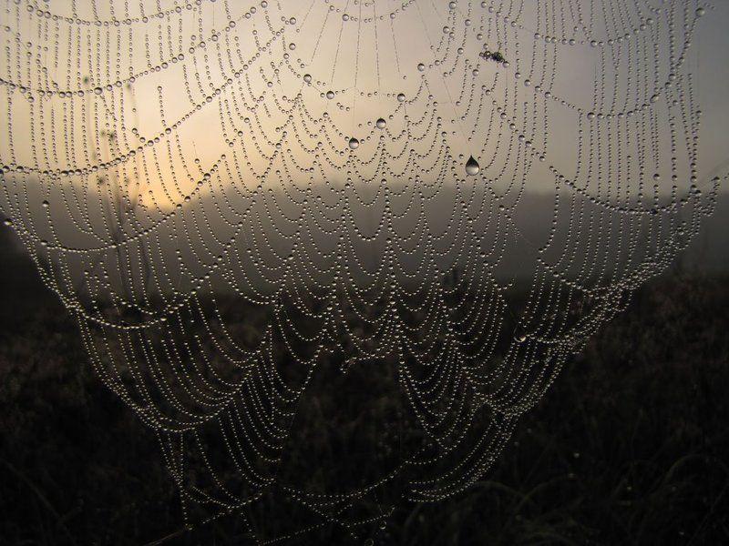 паутина, капли, вода, утро, восход, роса Занавесphoto preview