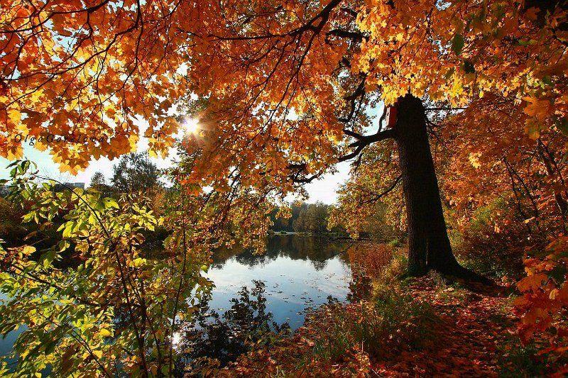 фото, парк, осень, краски, пейзаж осенняя пораphoto preview