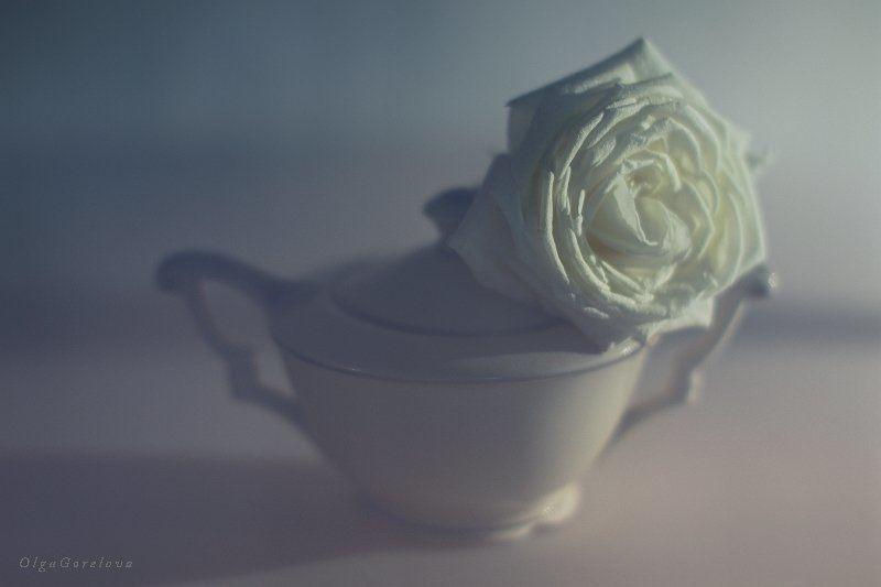 фото, натюрморт, роза, цветок цветок романтикиphoto preview