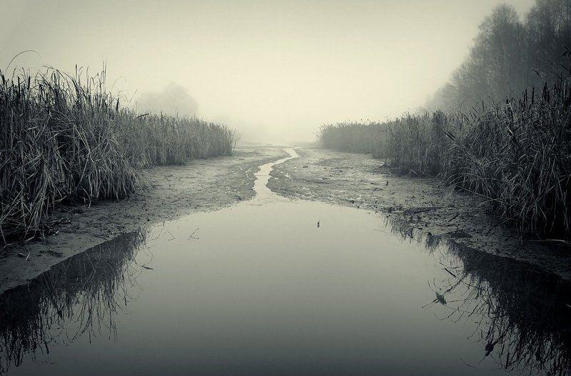 пейзаж, туман, река photo preview