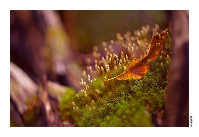 природа, макро Сказочный микро-мирphoto preview