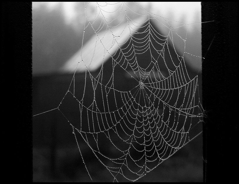 осень, паутина, туман, дождь Окно в осеньphoto preview