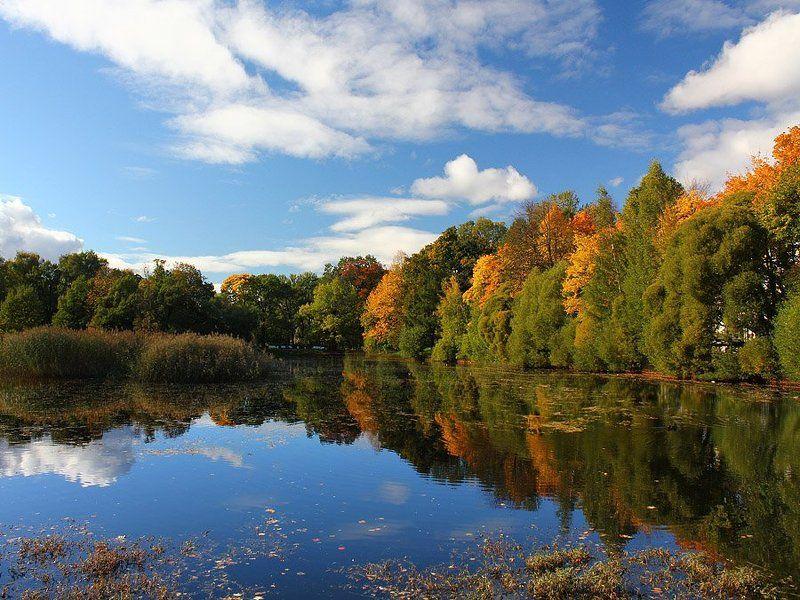 парк, осень, деревья, санкт-петербург, озеро, таврический Краски осениphoto preview