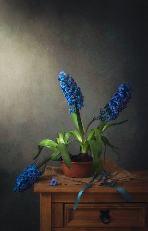 натюрморт, гиацинты, голубая  лента С гиацинтамиphoto preview