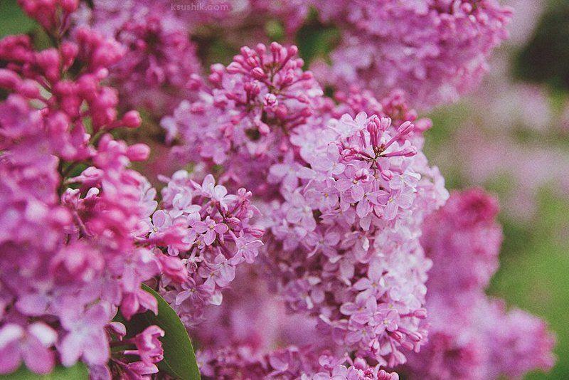 Lilac Gardenphoto preview