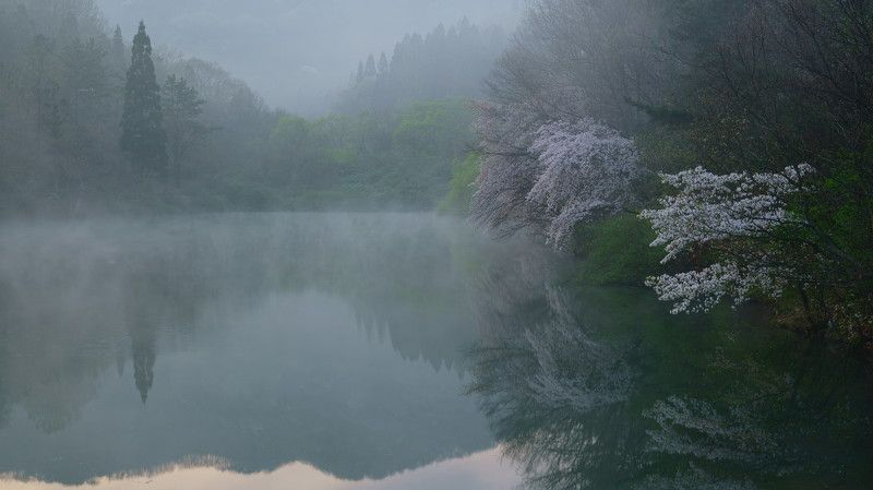 spring,reservoir,fog,morning,cherry blossom,mountain,reflection,flower,fog, Early morning mistphoto preview