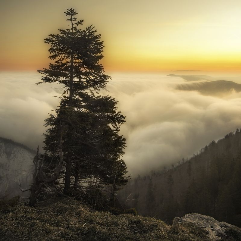 creux duvan,switzerland,sunrise,clouds,alone tree canyons Guardianphoto preview
