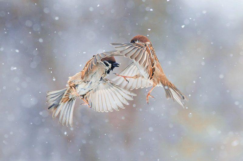птицы кружась со снегомphoto preview