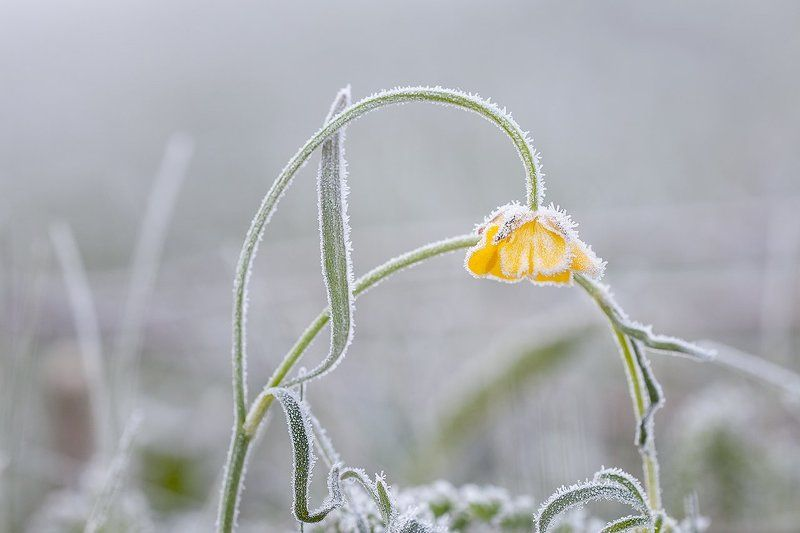 Холодное майское утро.photo preview