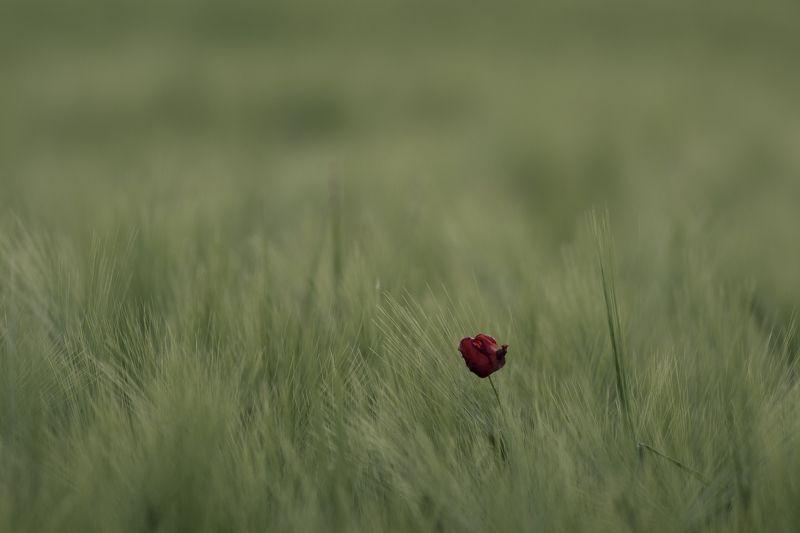 Одиночествоphoto preview
