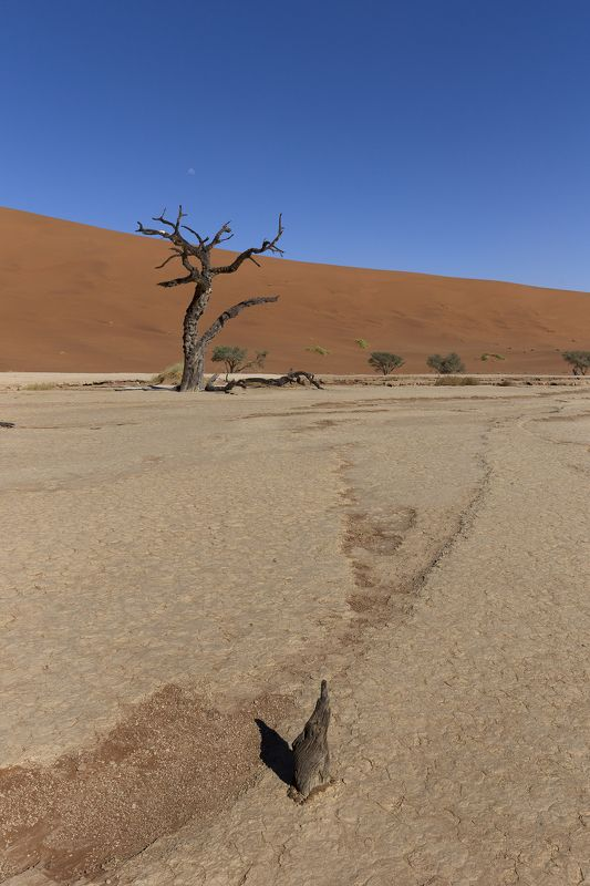 Namibia Desertphoto preview