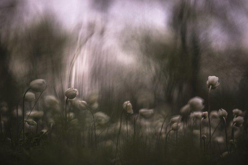 ветренца, свет, цвет, гроза, предчуствие, стихия, краски, дивногорье Предчуствие грозы...photo preview