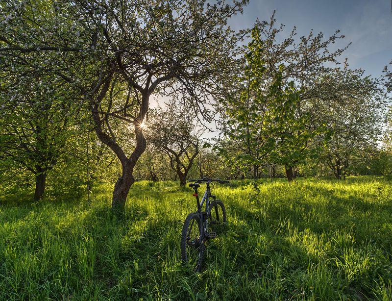 Яблони цветутphoto preview