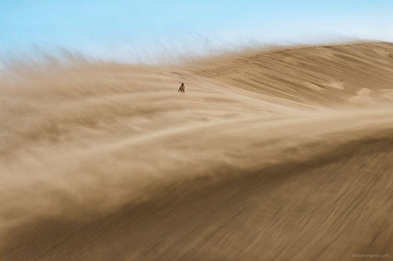 Казахстан, бархан, песок, песчаная буря, человек, стихия Странникphoto preview