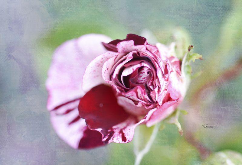 Лето пахнет розамиphoto preview