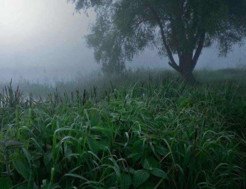 Утро крапивыphoto preview