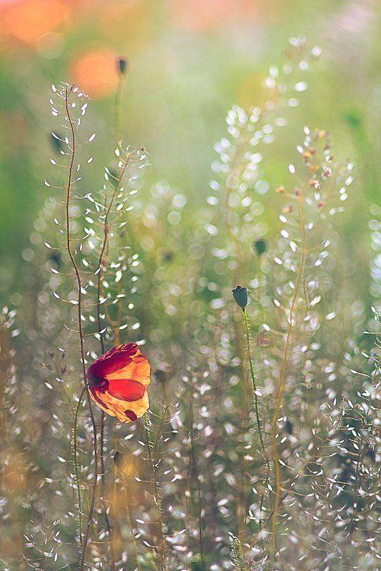 nature, flower, light Ephemeral beautyphoto preview