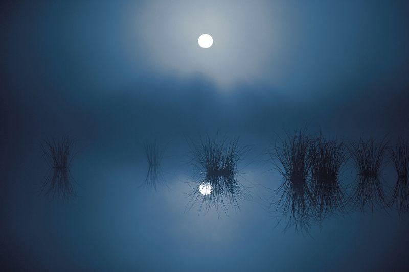 ночь,туман,болото,югра ночной туманphoto preview