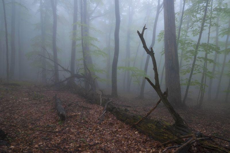 Туманная перспектива..... photo preview