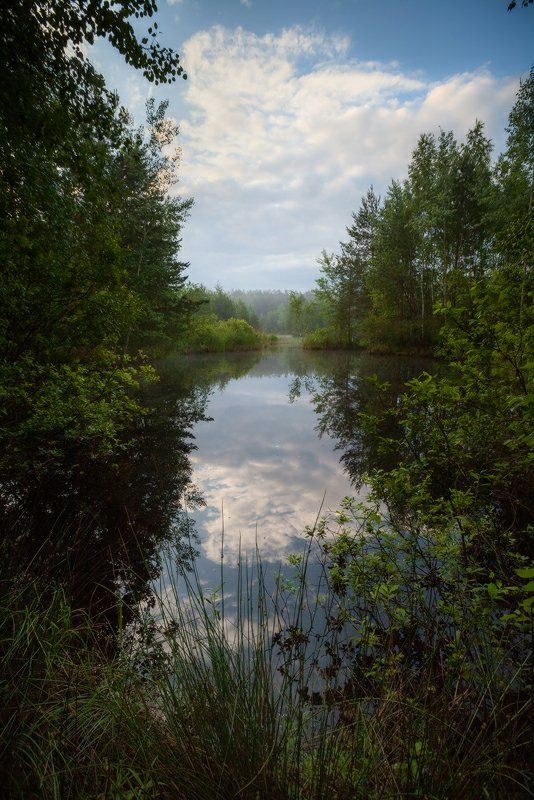 лето, утро, озеро, лес, благодать, беларусь Рассветphoto preview