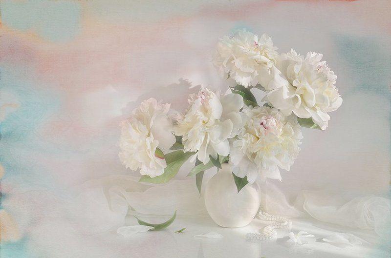 белые пионы весна акварель радость свет В утреннем светеphoto preview