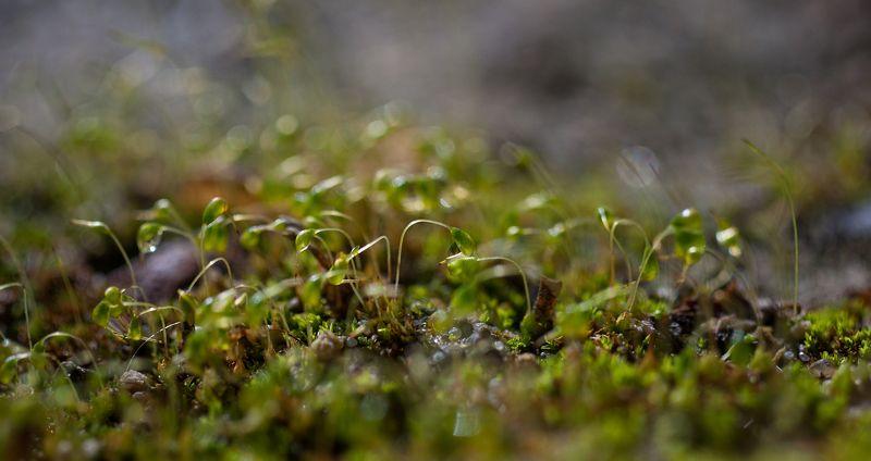 макро,роса,вега photo preview