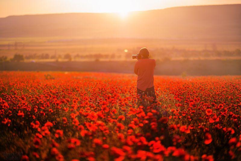 крым , маки , русское поле с маками , закат , солнце , поле , просторы Любитель маков...photo preview