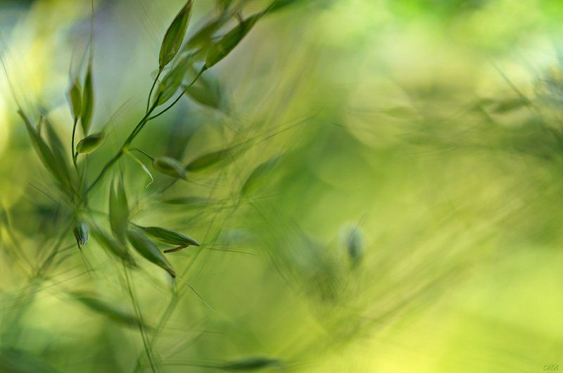 abstract, abstract art, abstraction, blue, color, colors, color image, composition, grass, grasses,green, image, life, photography, The Secret Life of the Grassesphoto preview