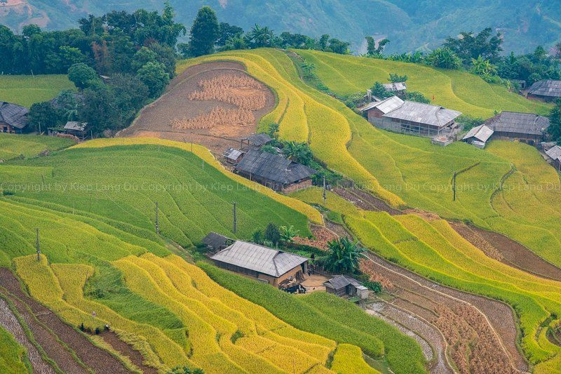 purchase a license all royalty-free licenses include global use rights, comprehensive protection, simple pricing with volume discounts available xssml 4896 x 2709 px | 16.32 x 9.03 in | 300 dpi size guide Rice fields on terraced of Hoang Su Phi, Ha Giang, Vietnamphoto preview