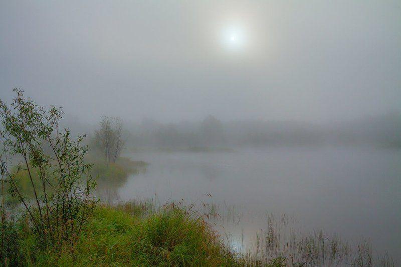 В прохладе утреннего туманаphoto preview