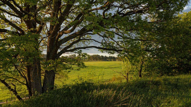 Тверь, Тверская область, Лето, Природа, Пейзаж ***photo preview