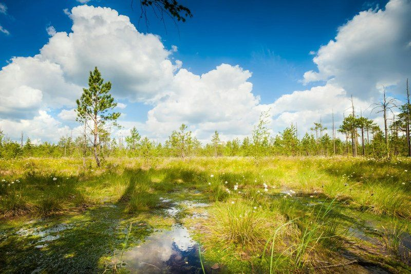 болото, лес, заказник 40 мин по \