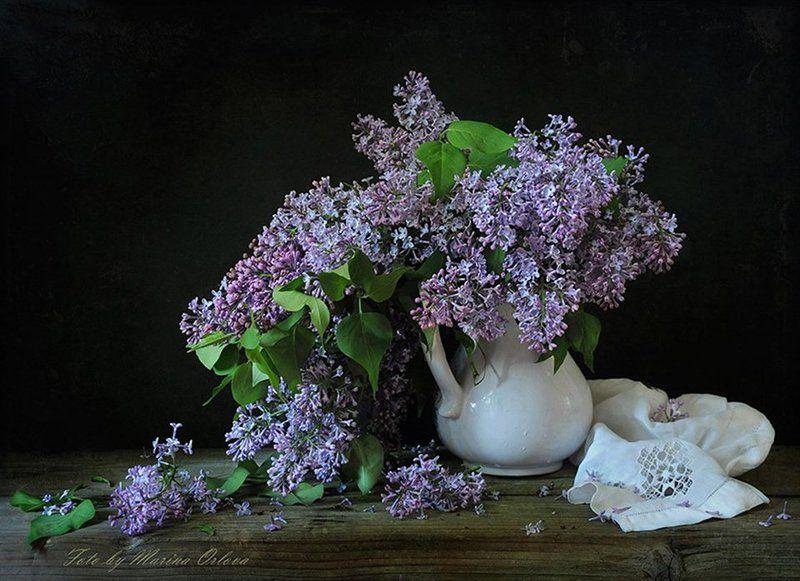 лето июнь сирень цветы Отцветает...photo preview