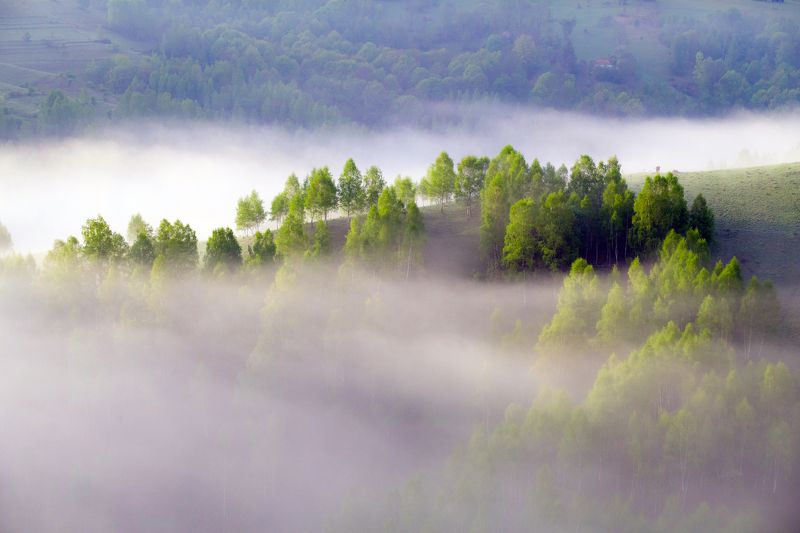 mist,fog,hill,trees,nature,apuseni,romania, Touchphoto preview