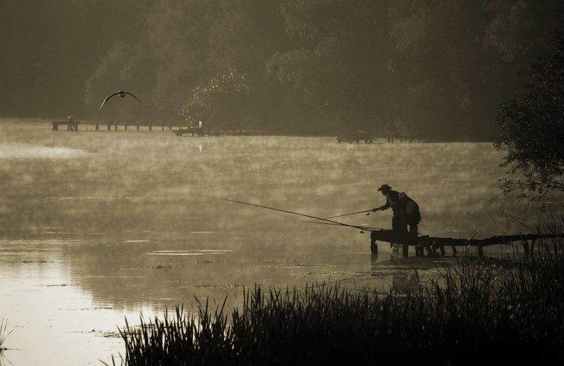 утро, рыбалка, чайка, туман три рыбачкаphoto preview