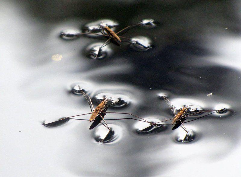 водомерки, осень, вода, река На темной водеphoto preview